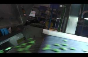 Embedded thumbnail for EyePro System - Throughput of Chewing gum Sorting System
